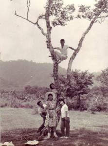 戸隠牧場の白樺の 木に登る(11,10回生)